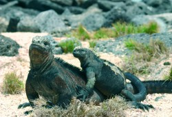 ER_Ecuador mit Galapagos_05_03
