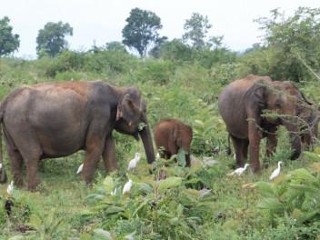 Elefanten aus nächster Nähe