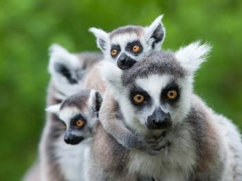 Verliebte Bäume, Karstlandschaften und Lemuren