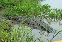 Bei der Krokodil-Tour bot sich oft der Anblick der majestätischen Raubtiere.