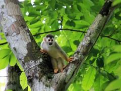 Faszination Costa Rica