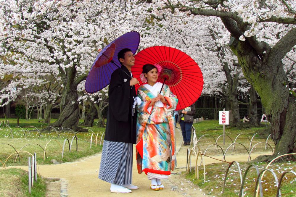 Japan zur Kirschblütenzeit » WORLD INSIGHT