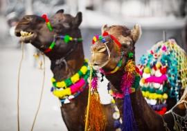 Oh, wie schön ist Rajasthan!