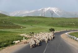 GeorgienArmenien_Reisemagazin (c) WORLD INSIGHT 21
