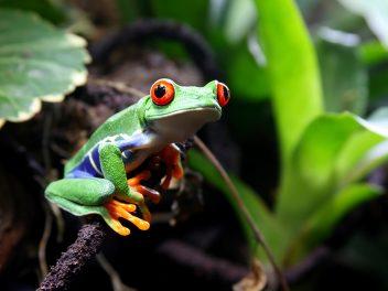 Artenreichtum im Corcovado-Nationalpark