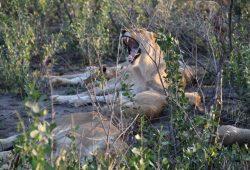 suedafrika_sievers_reisebericht-c-world-insight-1