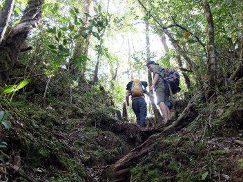 Aktiv durch die ältesten Regenwälder der Welt
