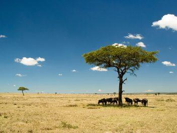 Abenteuer Masai Mara und ein neuer Zukunftsplan