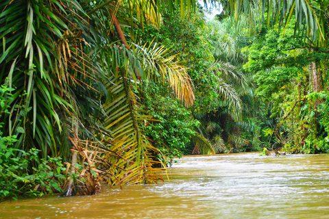 Fluss im Tropenwald