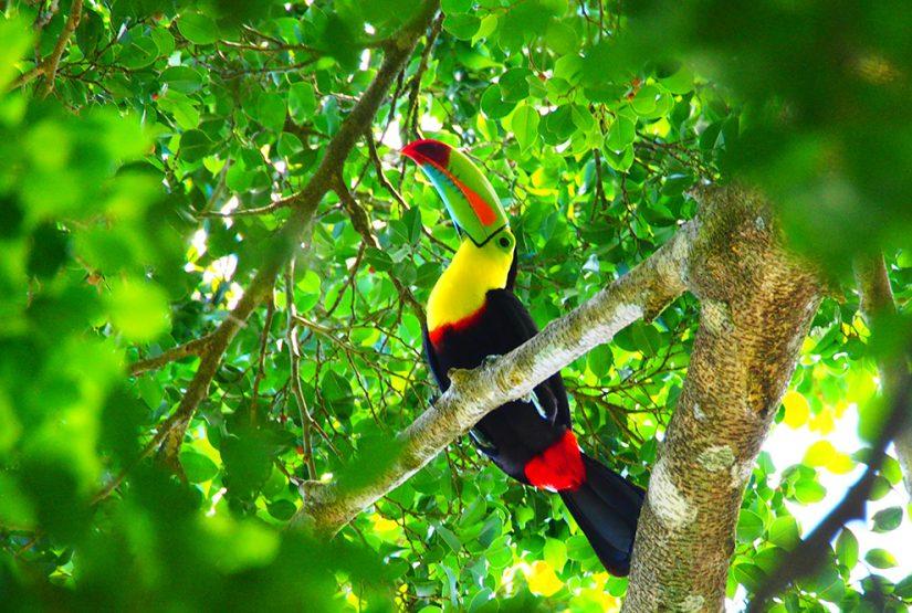Pura vida Costa Rica » WORLD INSIGHT