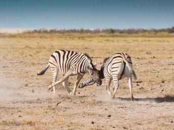 Joy of Travel zwischen Farmland und Wüste Namibias