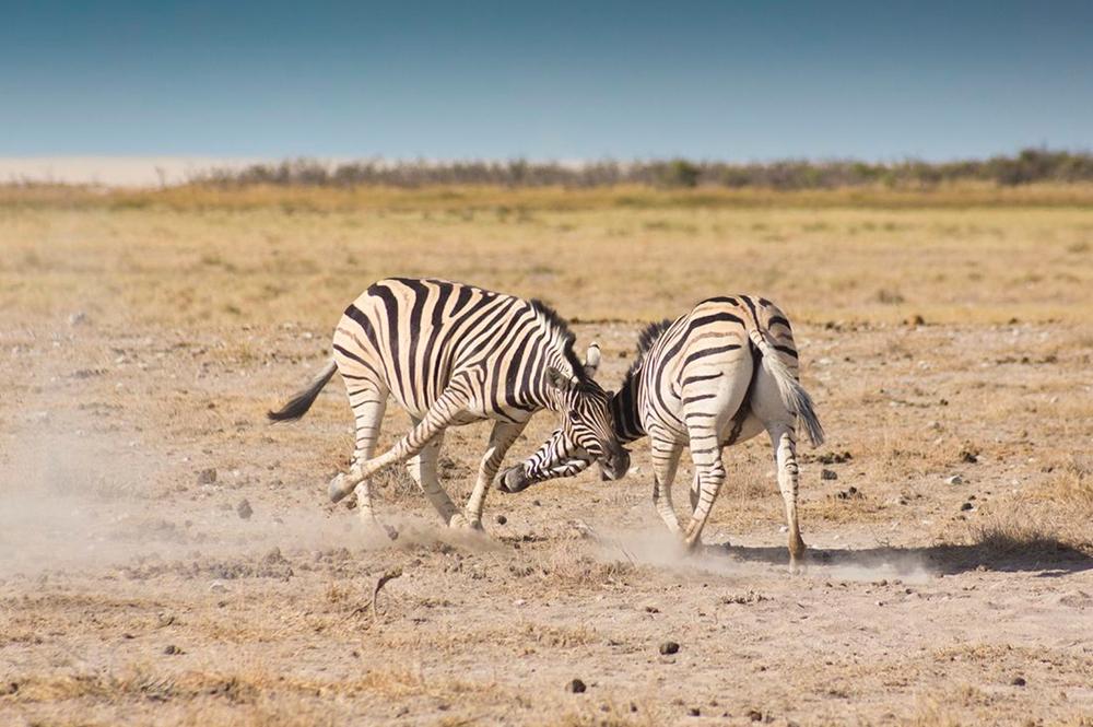 Joy of Travel zwischen Farmland und Wüste Namibias » WORLD ...