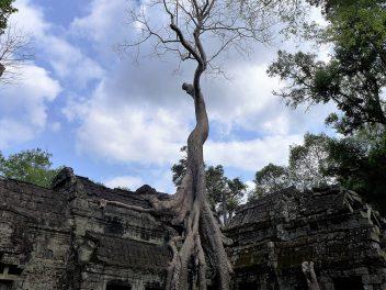 Von mystischen Tempeln und einem Bad mit Elefanten