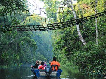 Die wilde Tierwelt von Kinabatangan