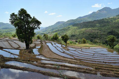 Wanderung im Hochland Sri Lankas