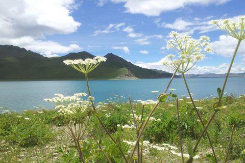 Der türkis schimmernde Yamdrok-See