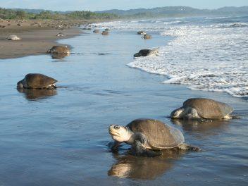 Costa Ricas große Naturschauspiele