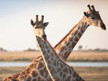 Wilde Tiere, faszinierende Landschaften, beeindruckende Völker