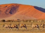 Unsere Adventure Lodges in Namibia und Botswana