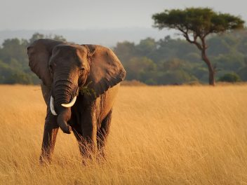 Kenia – Selbstversorgung statt Busch-Safari