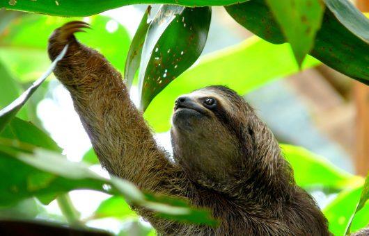 Wieso Reisende auch Naturschützer sind