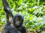Uganda – einfach unbeschreiblich